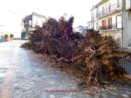 Zucchi per la fòcara di Casenove - 2011